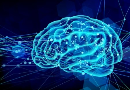 人工知能 脳