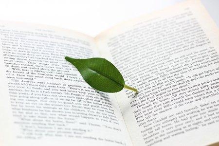 小説とエッセイ